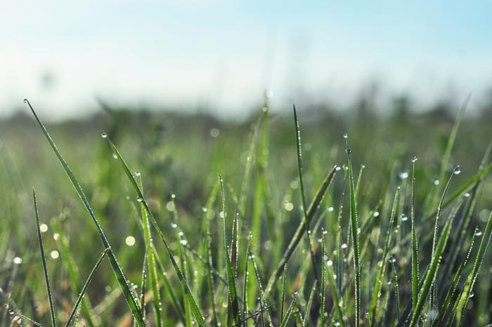 Daggen i gräset