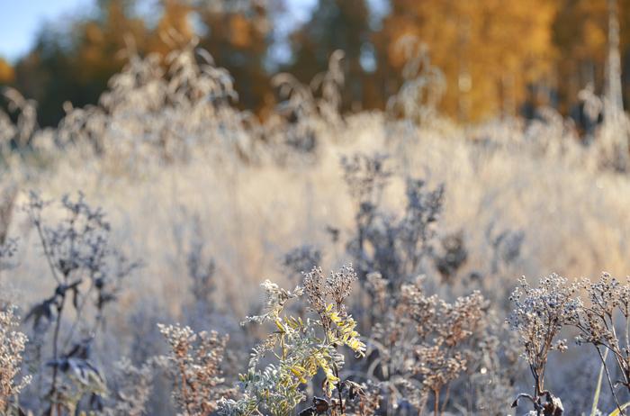Frostmorgon