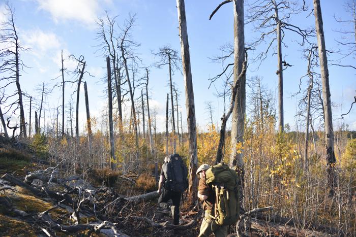 Det såg både hemskt och vackert ut på samma gång där det brunnit. Stora döda träd men små vackra björkar växte upp och gav nytt liv.