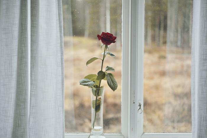 Och på tal om Nicke Sjödin galan så måste rosen jag fick den kvällen varit magisk. Nu har det snart gått en hel månad, och rosen står fortfarande kvar lika vacker. Har aldrig varit med om liknande! Annars brukar ju rosor bara hålla sig vackra några dagar. Måste vara Nicke som spökar ;)