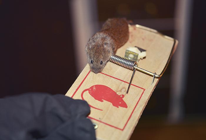 Det gör ju inte saken lättare att den ska titta på mig med de där stora, mörka, söta ögonen. Hade varit lättare om det var fula, äckliga råttor istället för små söt-sorkar eller vad det nu än är.