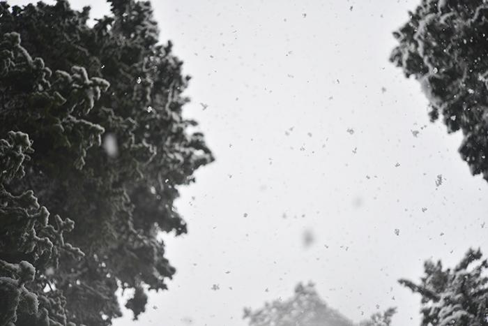 Försökte ta en bild på snöflingorna som föll från himlen. Det föll så sakta och vackert.