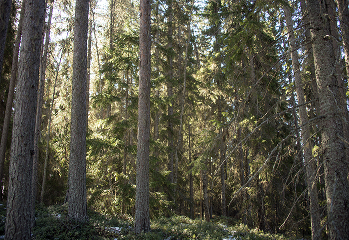 Inne i skogen på den vackra ön. Som ett litet paradis. Här skulle jag vilja bo :)