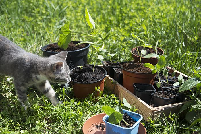 Nayeli följde med och sprang in i växthusets glasfönster tre gånger innan hon förstod att det inte funkade så.