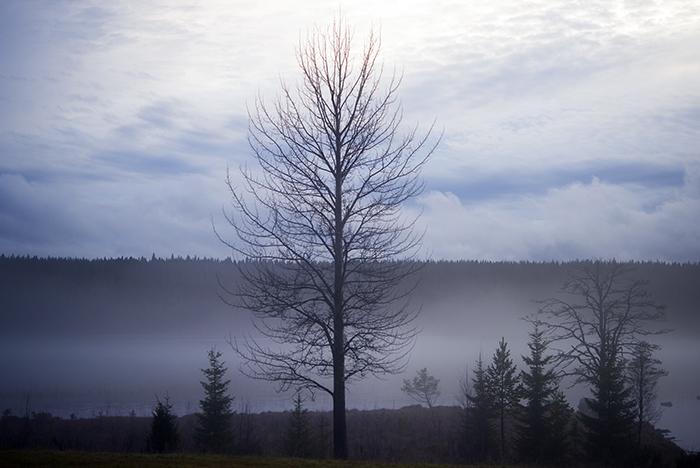 November. En månad av mörker, stillhet och rå kyla. Ändå så vacker och mystisk på sitt sätt.