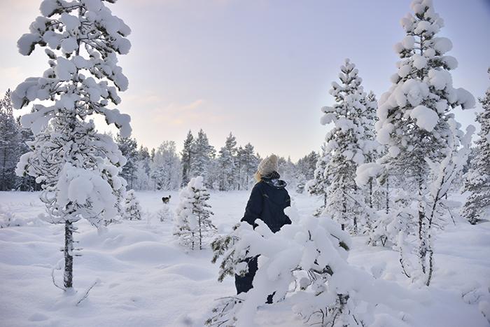 Och vandra runt i snötäckta, mjuka, tysta vinterskogar.
