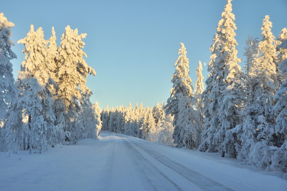 Vill åka bil på grusvägar genom snötunga granarskogar.
