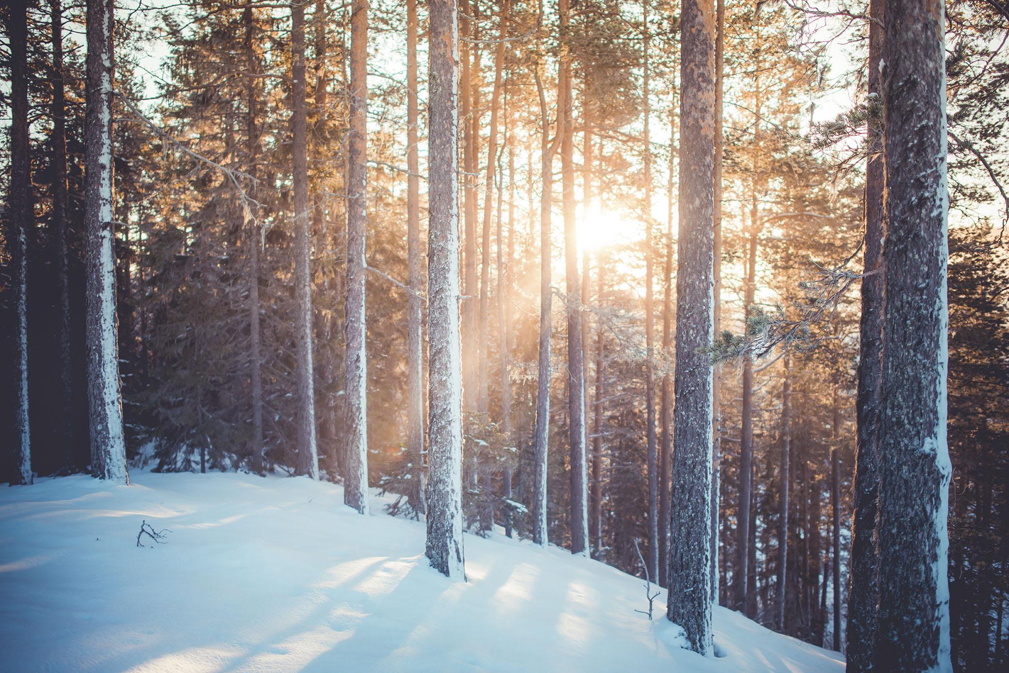 Solens första strålar genom träden. Jag fick nästan vårkänslor.
