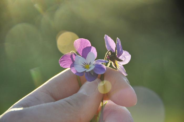 Vårkänslor | Jonna Jinton