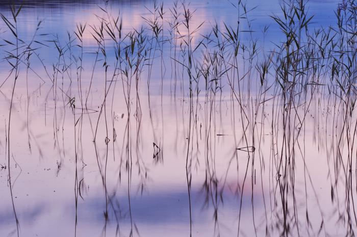 Vattnet alldeles spegelblankt