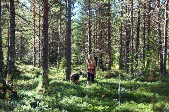 Jag och Nanook på en långtur i skogen