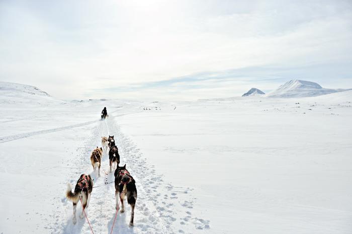 Foto taget från släden bakom mina underbara draghundar där vi susar fram genom snön, någonstans vid gränsen mellan Norge och Sverige.