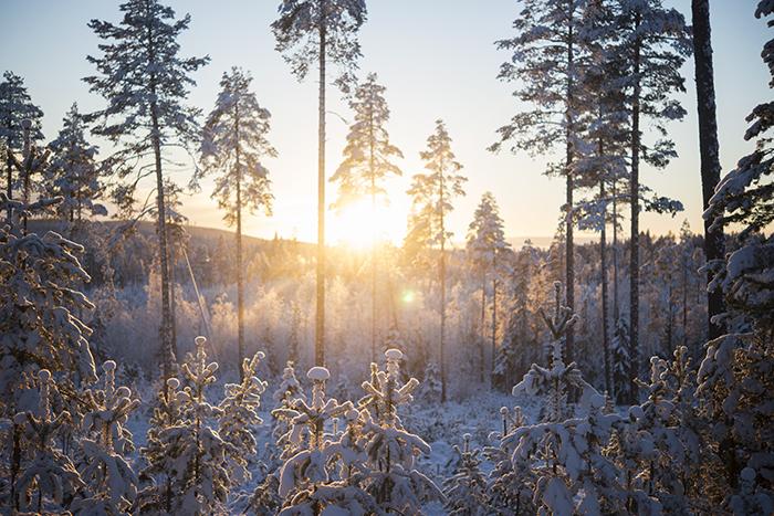 Så här vackert har vi haft de senaste dagarna här. Snön gör allt så mycket ljusare och vackrare.