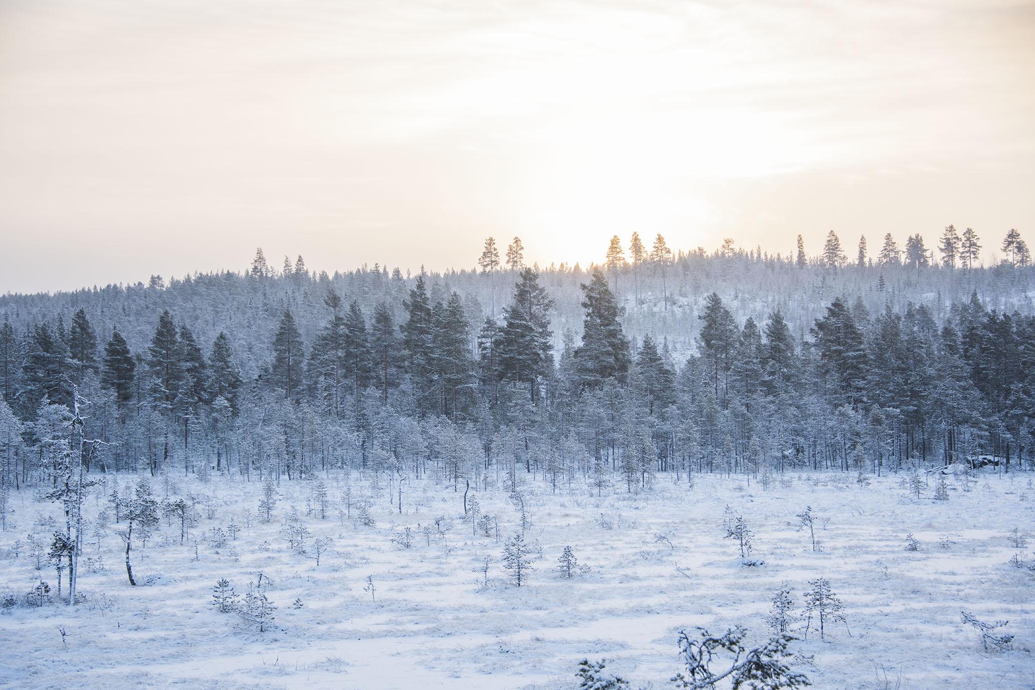 Kyliga dagar. Var tvungen att stanna till på skogsvägarna ett antal gånger för att fota. Det är ju något speciellt när det är väldigt kallt ute.
